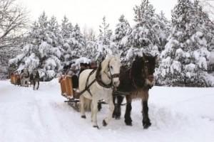 Erzgebirge FRIDOLIN busreisen